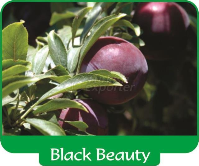 Слива Black Beauty
