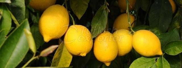 Kutdiken Lemon