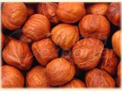 Red Hazelnut