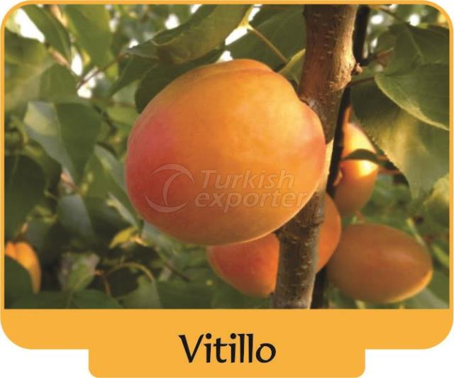 Абрикос Vitillo