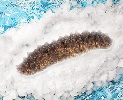 Sea Eggplant
