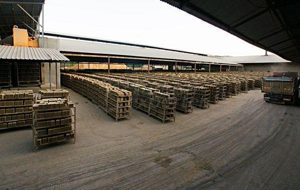 Bingöl Genç Tuğla Fabrikası