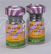 Alive Vaccine H-120 VH+H-120