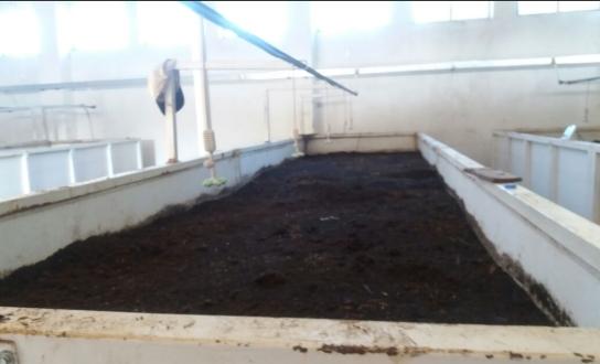 Worm Humus Plant