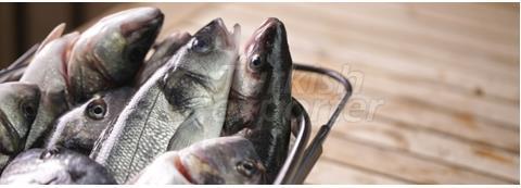 Sofralık Balık