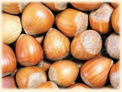 Оловянный орех