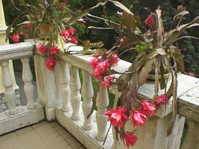 Natural Bioplasm-Ornamental Plants