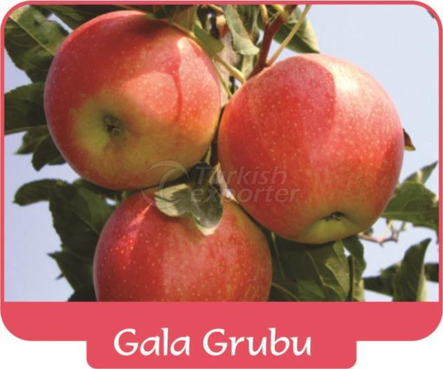 Яблоко Gala