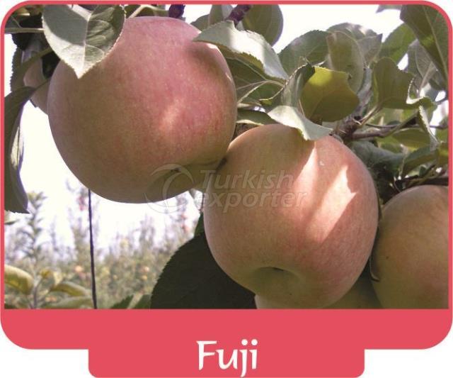 Яблоко Fuji
