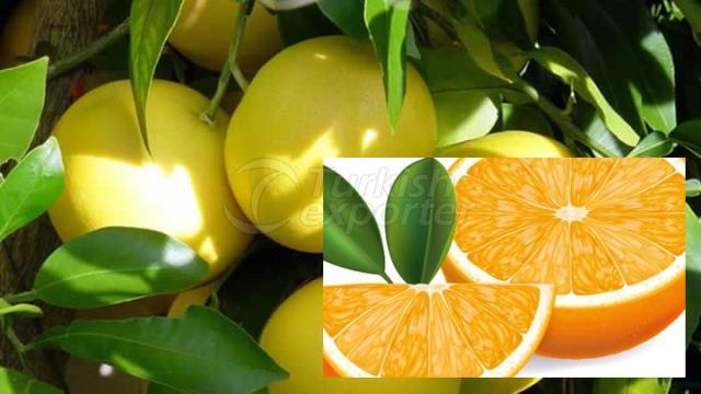Granpefruit