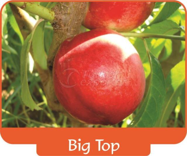 Нектарин Big Top