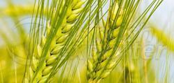 Fungicides-Anbimex®