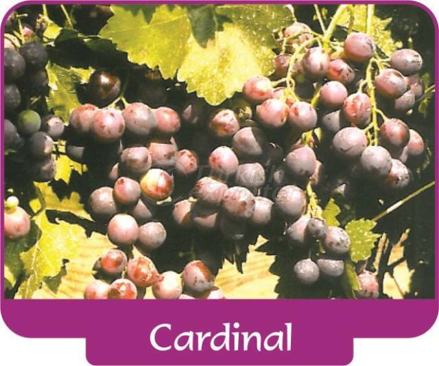 Cardeal de uva