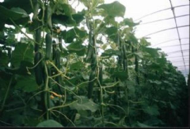 Natural Bioplasm-Cucumber