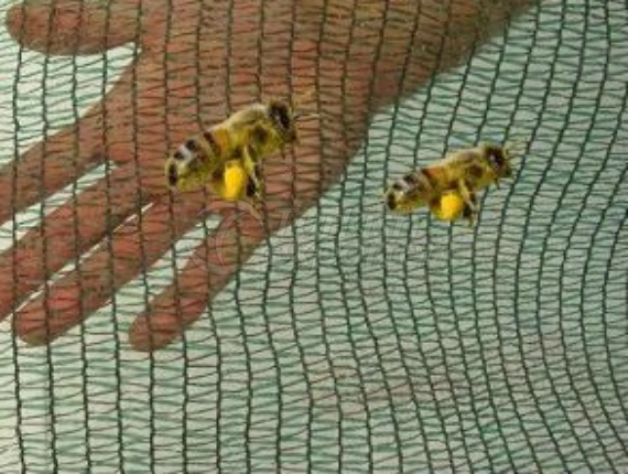 Anti Bee Nets