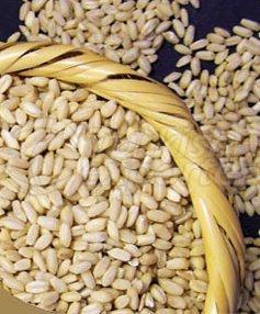 Wheat Bulk