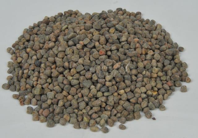 Ervilha Ervilha da Origem Etíope Ervilha