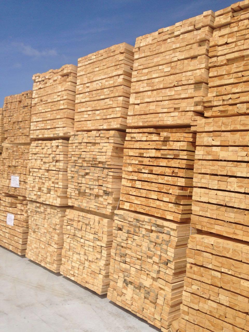 Timber 4599