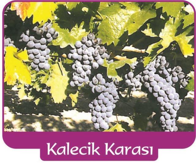 Виноград Каледжик Карасы