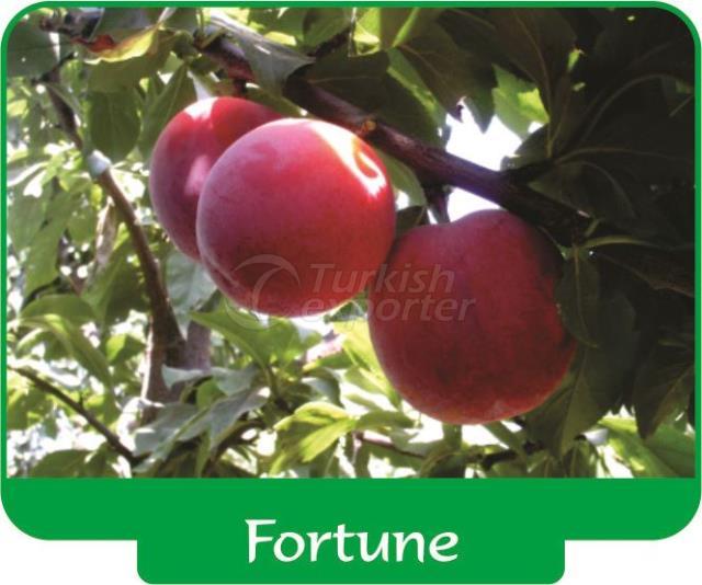 Слива Fortune