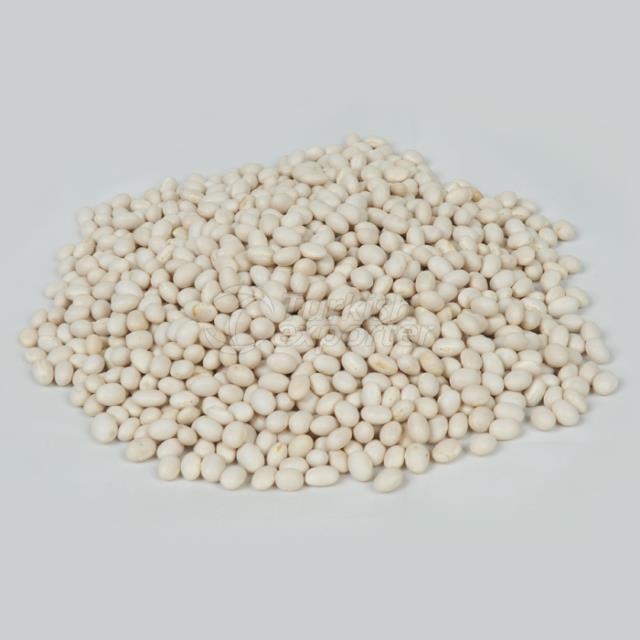 Ethiopian Origin White Pea Bean