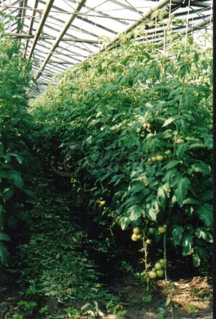 Natural Bioplasm-Tomato