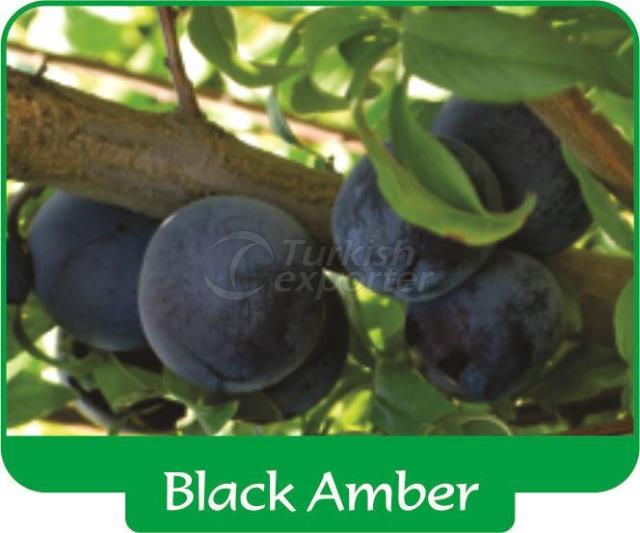 Слива Black Amber