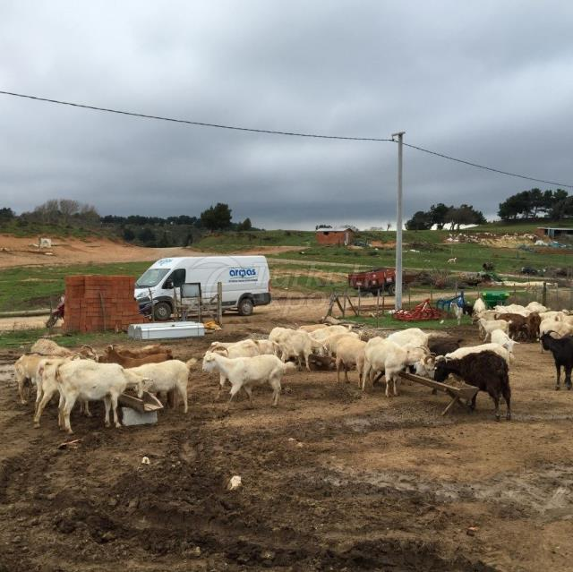 Ovine Milking Systems