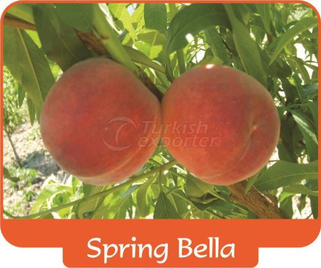 Персик Spring Bella