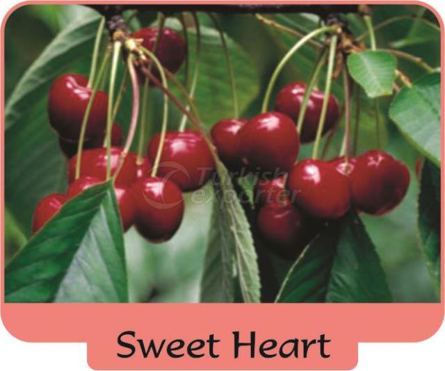 Черешня-вишня Sweet Heart