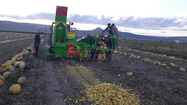 Pumpkin Seed Harvester