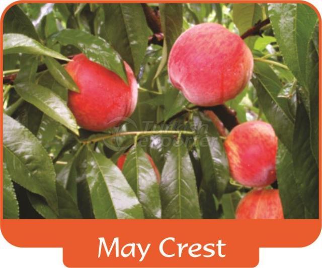 Персик May Crest