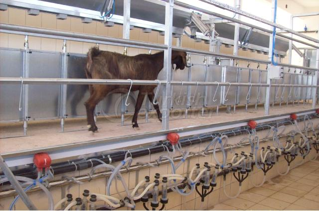 Goat Milking Parlour