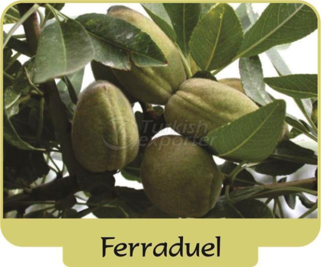 Миндаль Ferraduel