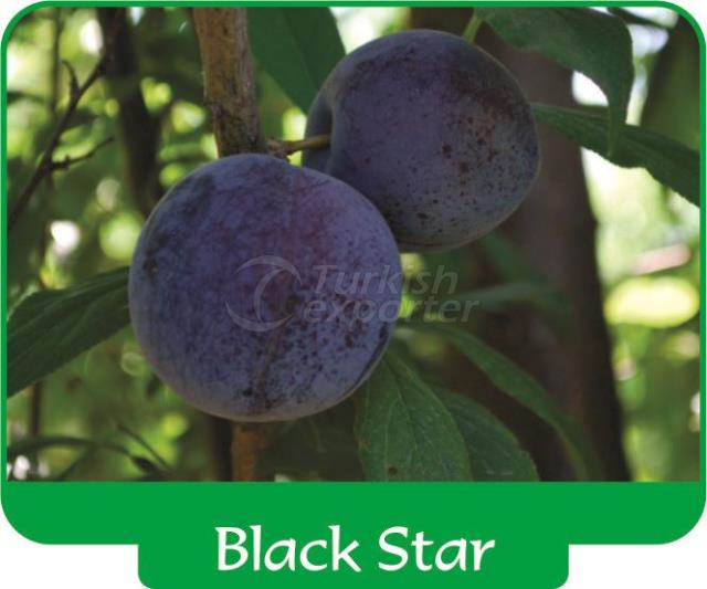 Слива Black Star