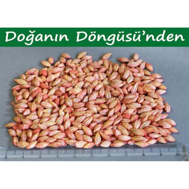Barley Aydan Hanim