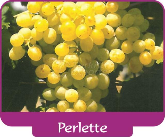 Виноград Perlette
