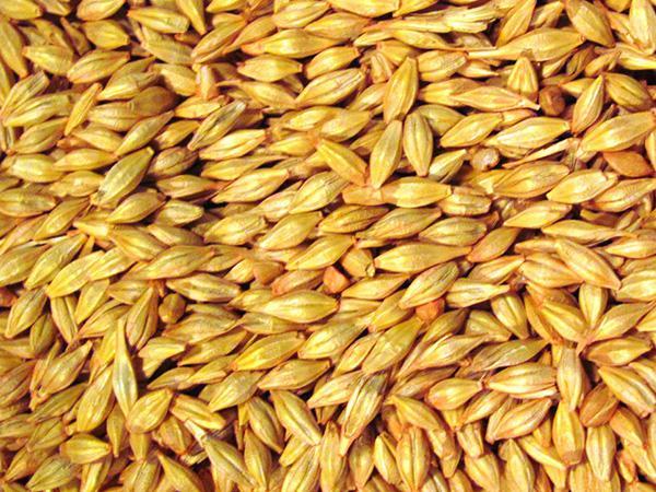 Rough Rice