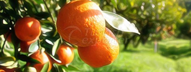 Fremont Mandarin