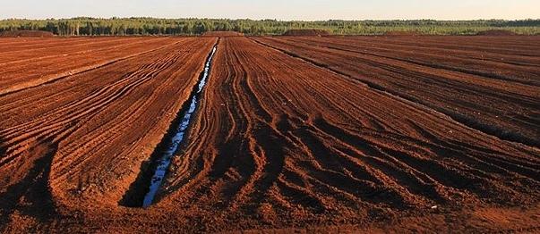 Baltic Peat