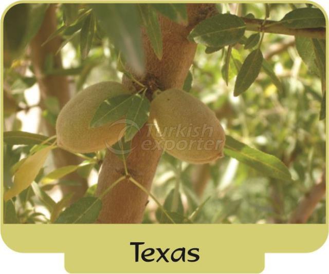 Миндаль Texas