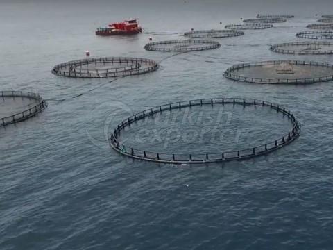 المزارع السمكية