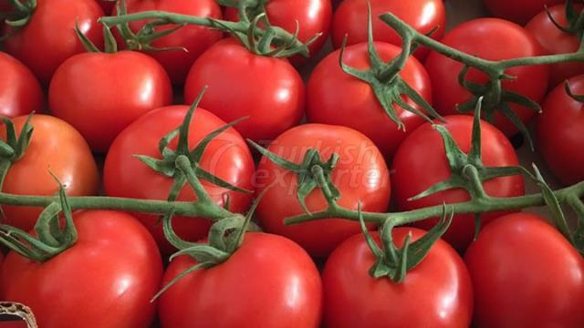 Grapollo Tomatoes