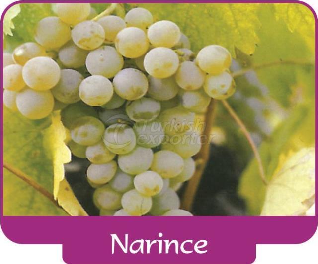 Виноград Narince