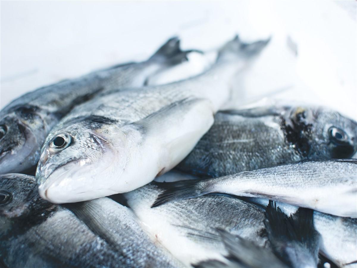 Salmon - 2