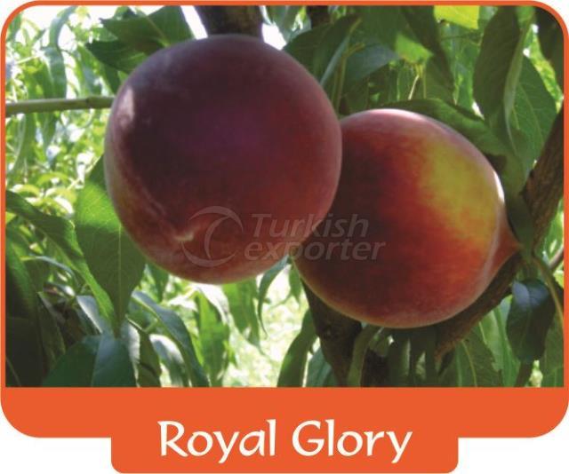 Персик Royal Glory