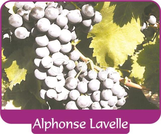 Uva Alphonse Lavelle