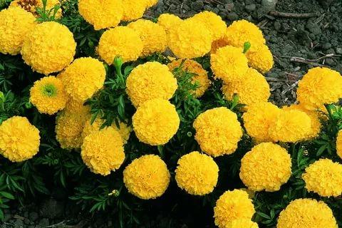 Seasonal Flowers Production