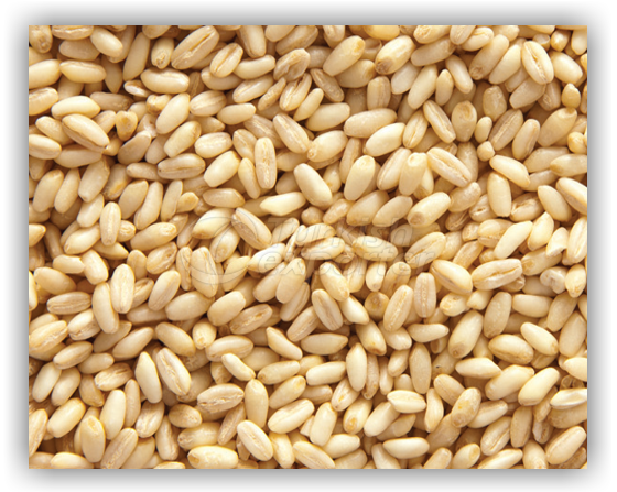 Wheat For Ashure