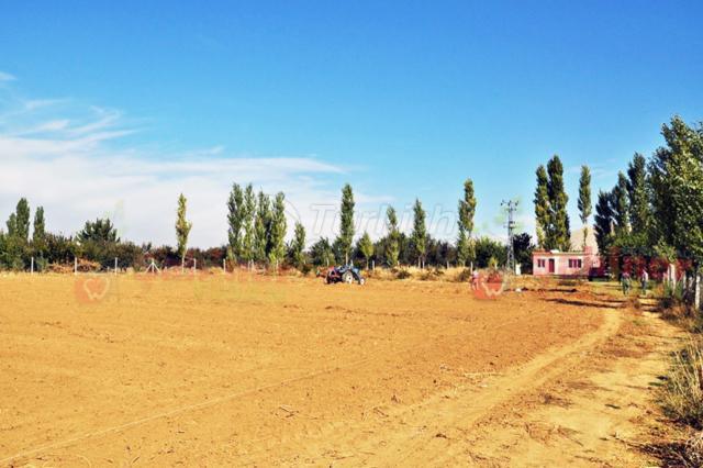 Sahiner Arboriculture